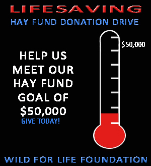 Hay Fund Donations