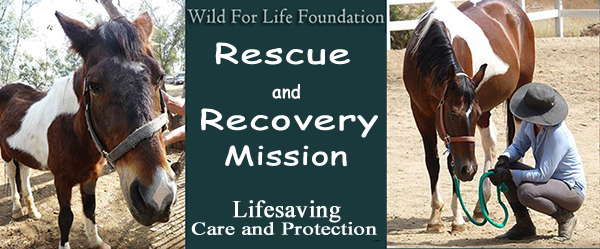 Rescue and Recovery Mission