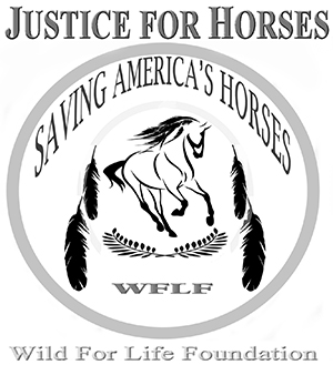 Justice for Horses and Burros